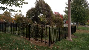 Culver Tree Fence