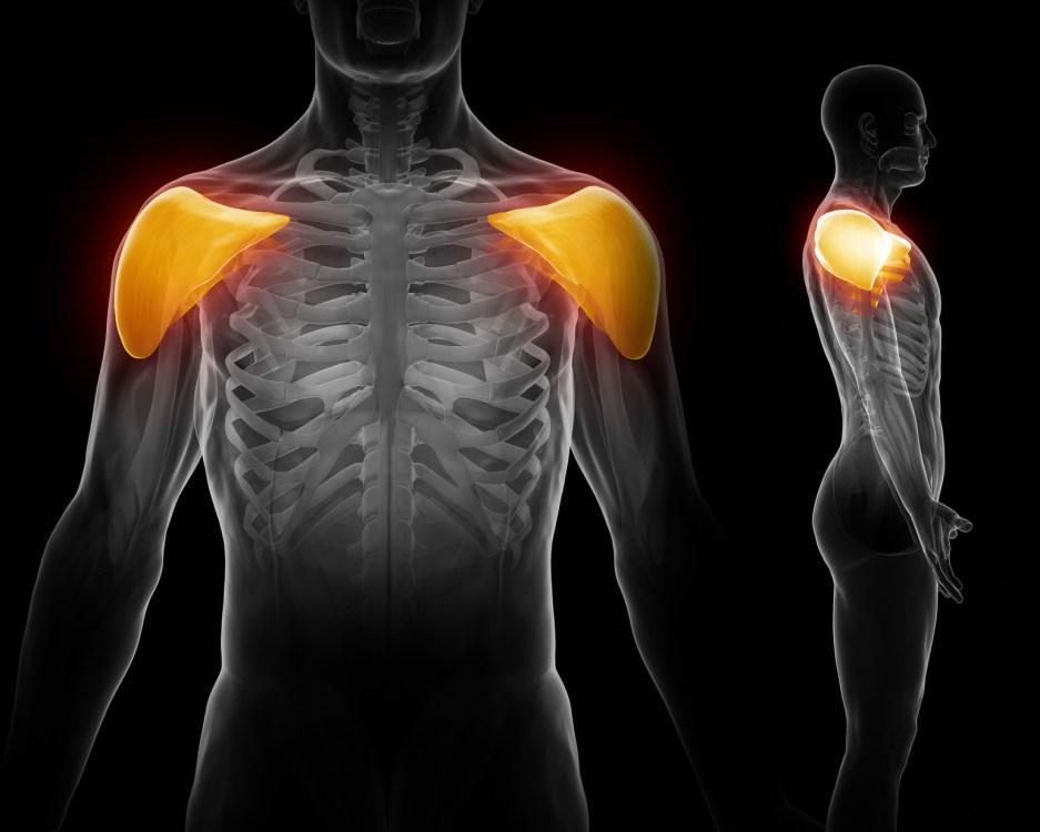三角筋の筋肉を表す人体構造図