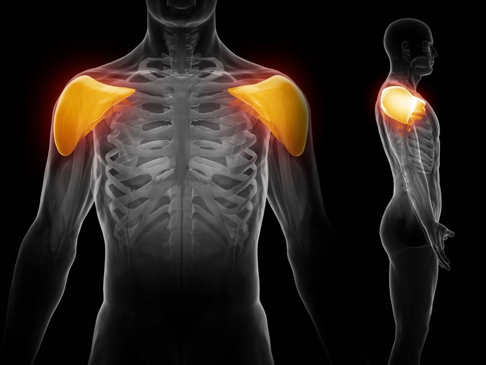 肩の前面 三角筋