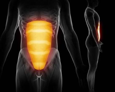 腹筋 人体構造図