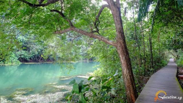 Mac a 300x169 MacRitchie Nature Trail in Singapore