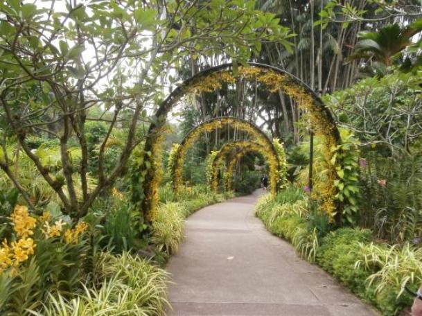 singapore botanic gardens 300x225 Singapore Botanic Gardens in Singapore