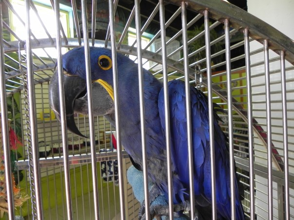 """The """"Greeter"""" at The Aviary, in Cauley Square Historic Village where the Rallye fun began."""