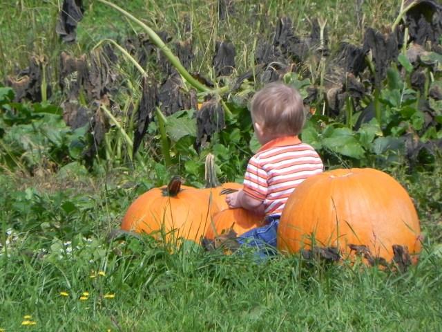 NC Pumpkin Patch