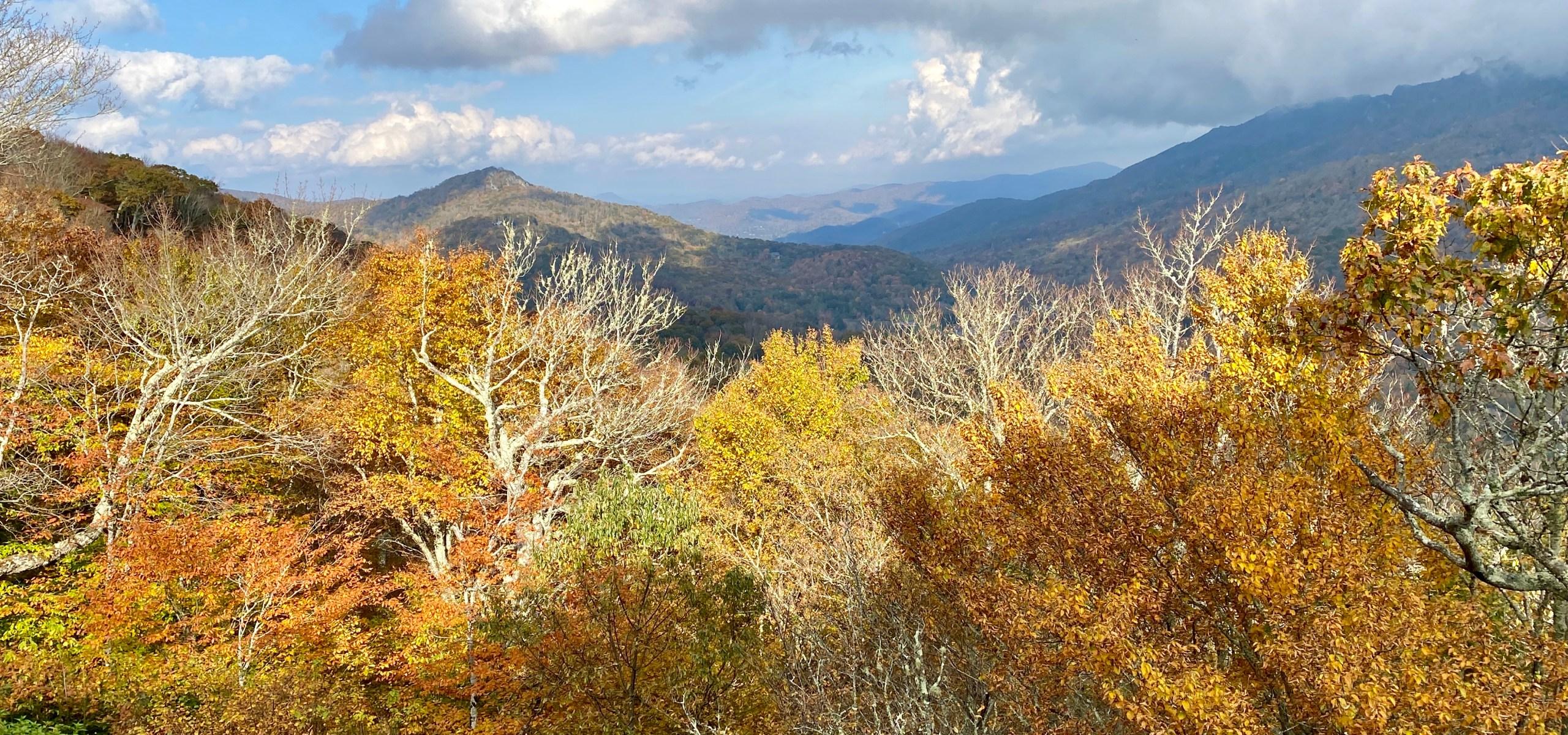Fall color, Linville, North Carolina