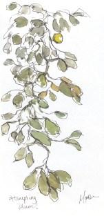 Maxine Dodd, a plum, painting