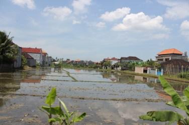Rice paddies in-between the villas
