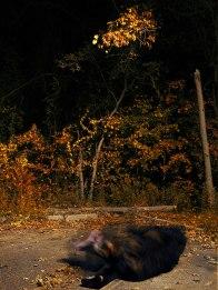 SMTransitiion.Bear.Fall
