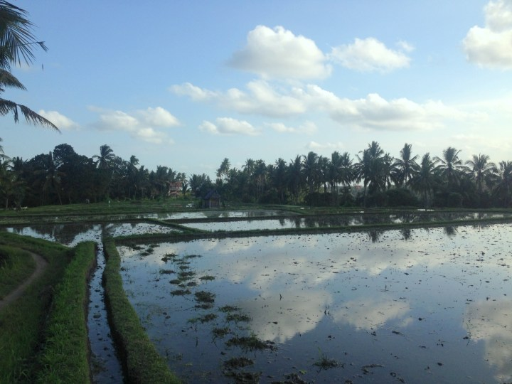 rice-field-terrace-ubud-bali-08