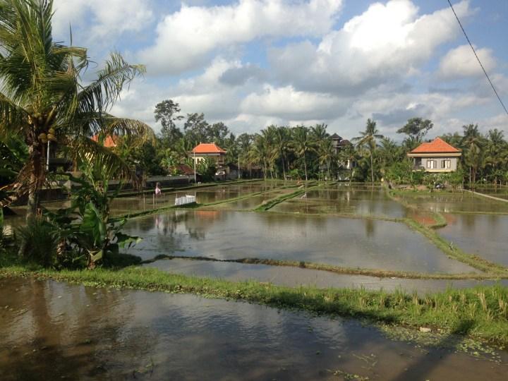 rice-fields-ubud-bali-01