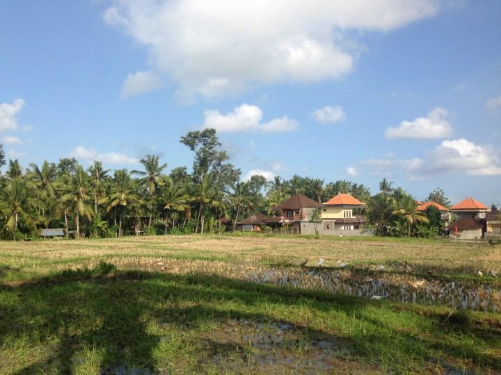 rice-fields-ubud-bali-02