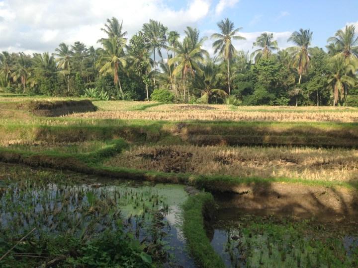 rice-fields-ubud-bali-03