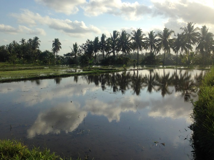water-rice-fields-ubud-bali-09