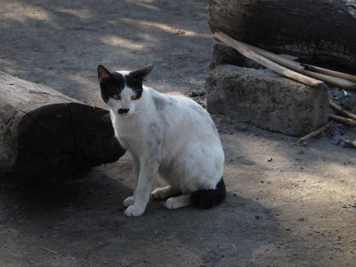 «ШОК! Кот, в которого вселилась душа Гитлера, взорвал интернет!» Вот такой персонаж мимо пробегал во время завтрака.