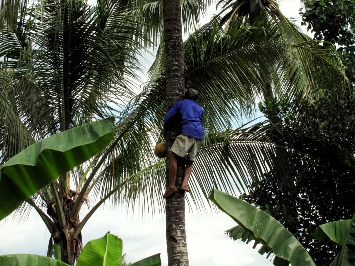 Спуск с кокосом