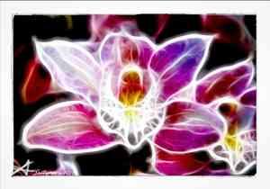 Orchid Light