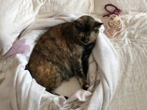 メイフェアリー愛猫うぃちゃん