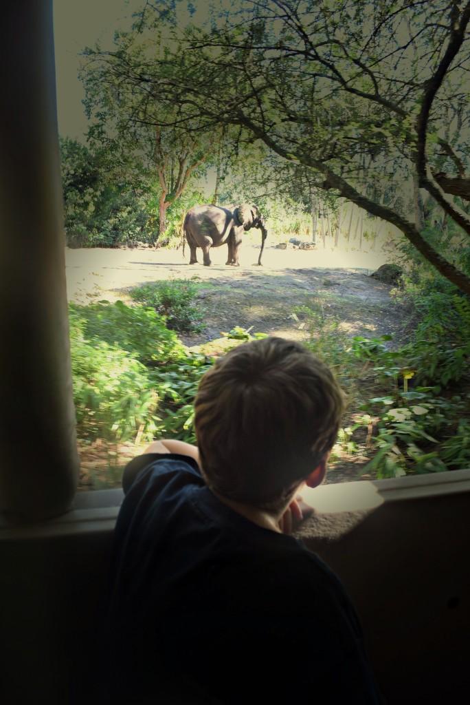 WDW AnimalKingdom SafariRide Elephant