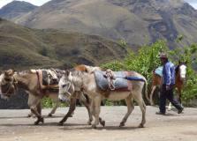 Santa cruz 1 colcabamba muletier