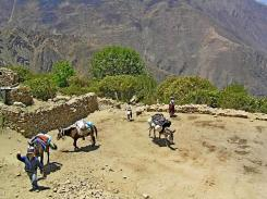 J3 17-jilla mules-arrive