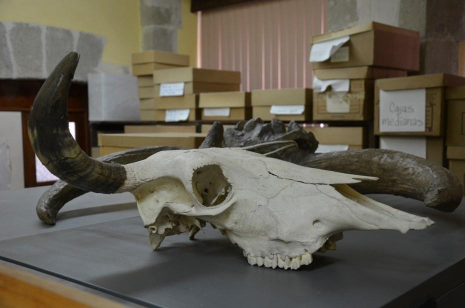 laboratorio de arqueozoología INAH