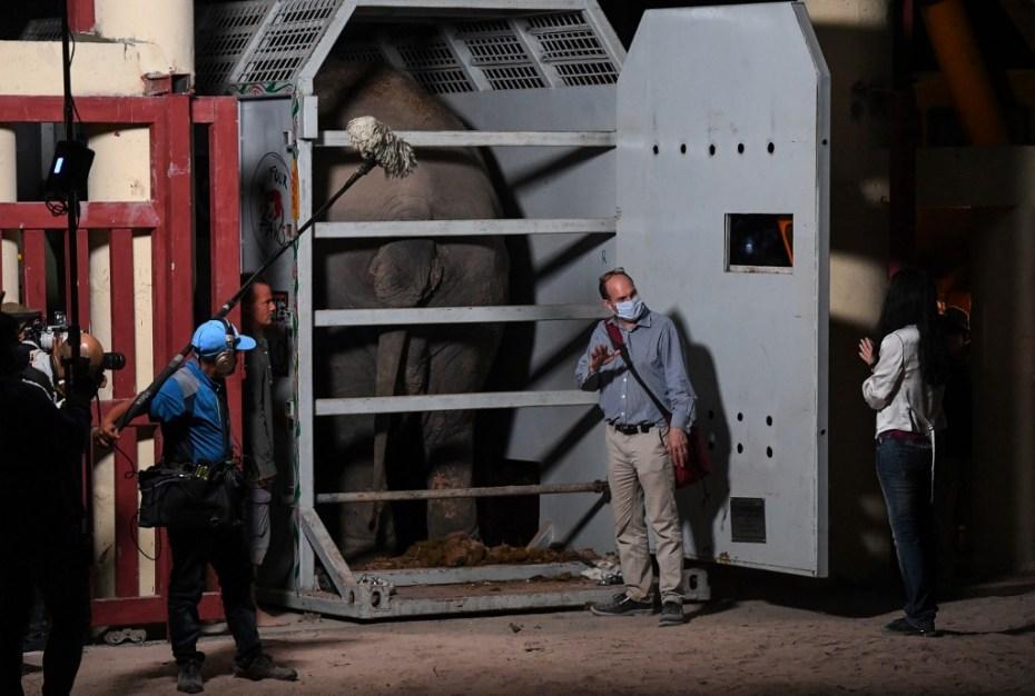 El elefante más solitario, Kaavan trasladado a su nuevo hogar