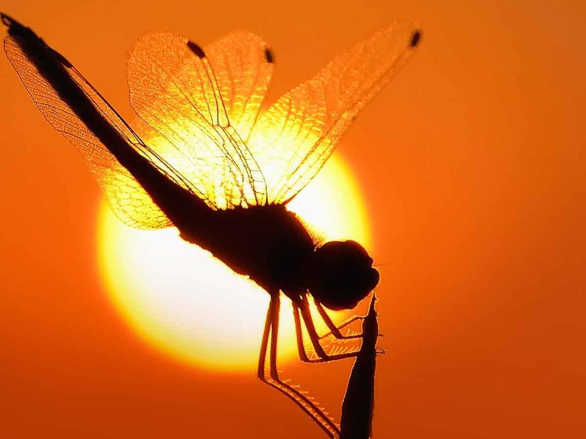 flight dawn sunset summer