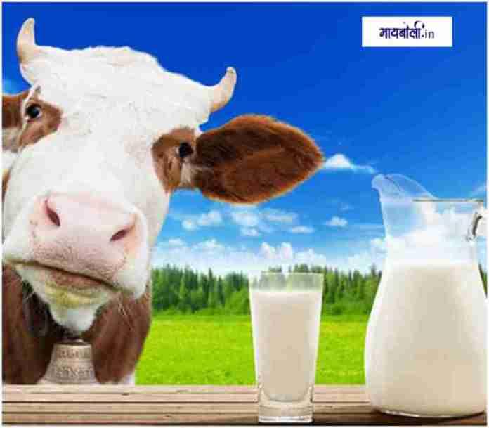 गाईचे दूध