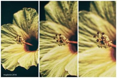 flowertrio