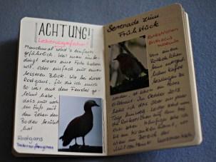 Ruddy Shelduck and European Robin