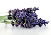 lavendar_istock