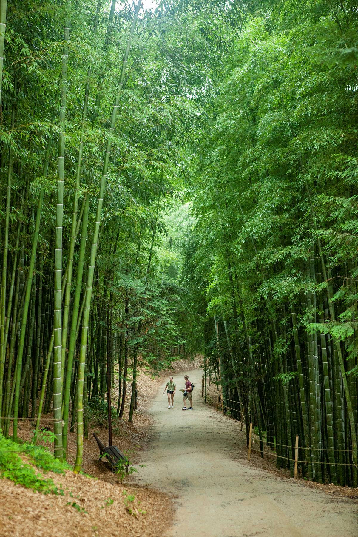 2.2 kilometers long to enjoy bamboo bathing