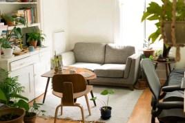 Boletín #6 Noviembre - Plantas que purifican el aire de tu hogar