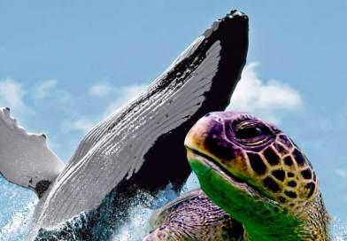 Tour avistamiento de ballenas y tortugas marinas