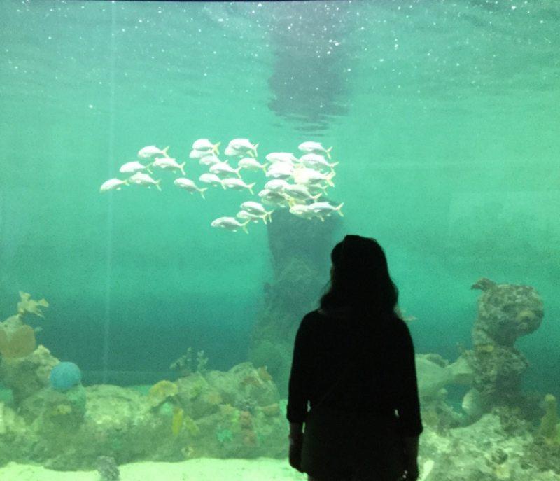 percera acuario mazatlán