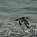 Destin sea bird