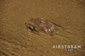 beachside-sp-or-crab-eye