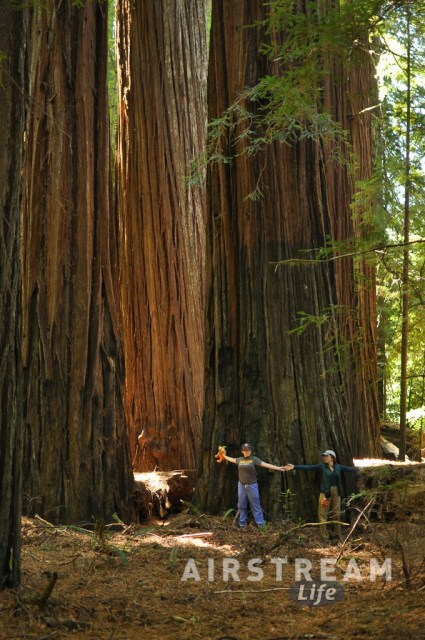humboldt-redwoods-eleanor-emma