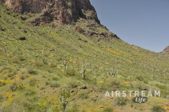 Picacho peak springtime