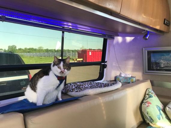 APZ10 Lambert cat