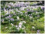 spring2_07