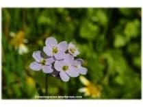 spring4_04