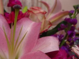 051412_1127_Flowers3.jpg