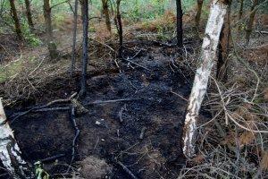wypalona część lasu