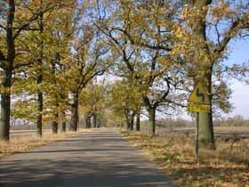 Aleja Dębowa - pomnik przyrody