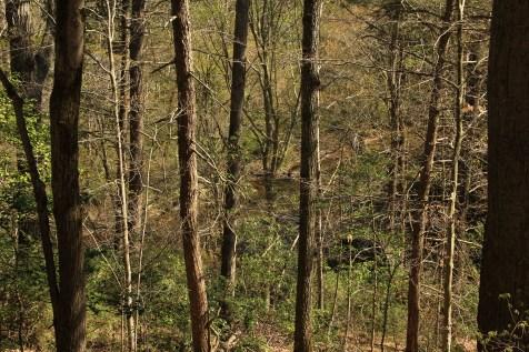 Battle of North Anna (Woods)