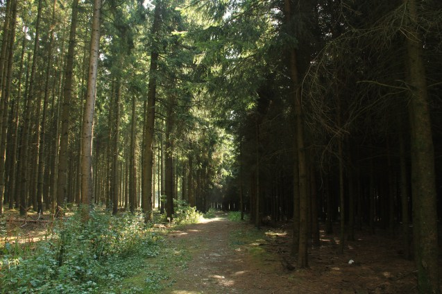 "Woods where the ""Band of Brothers"" Easy company fought"