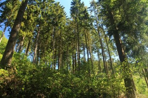 Hurtgen Forest Battlefield