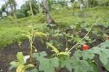 Hanging PET bottle garden for seedlings
