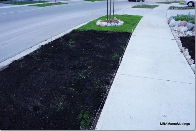 Re-seeding grass on a suburban boulevard